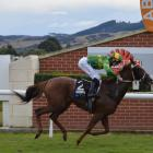 Coulee returns to racing today with a fresh-up run over 1200m at Gore. PHOTO: MATT SMITH