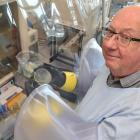 Microbiologist Prof Gerald Tannock prepares to work with a ''glove box'' in his laboratory at the...