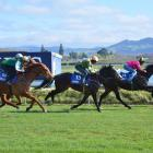 Passito (right, ridden by Kevin Kalychurun) beats Gallant Ruby (13), Tommy Tucker (12) and...