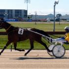 Sheemon is starting to find his old form after a strange past 12 months for the top trotter....