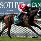 Southern Sav and Darryl Bradley are back together at Riccarton tomorrow. Photo: Trish Dunell.