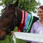 Laura King's tamed horse Charlie, who used to roam in the wild, won six ribbons as well as the...