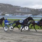 More The Better holds off stablemate Ultimate Machete to win the $22,000 sires' stakes heat at...