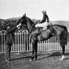 Mr J. Parsons' Yes, winner of the Kaikorai Handicap at the Dunedin Jockey Club's spring meeting...