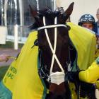 Have Faith In Me and his All Stars stablemates Lazarus and Smolda are the leading contenders for...