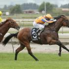 Heroic Valour in winning form at Matamata in February. He is one of two Te Akau-trained colts in...