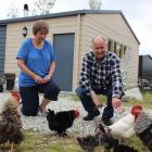 Lorraine and Steve Hawkins feed chickens on their property near Alexandra. Photo by Jono Edwards.