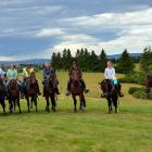 Horses who have graduated from Knight Stable Standardbred Rehoming reunite on a trek near...