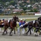 Ultimate Fella, shown winning at Forbury Park in December, is one of eight runners Temuka trainer...