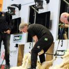 Prime Minister Bill English (left)  competes against Sir David Fagan at the World Shearing and...