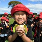 Brockville Full Primary School pupil Tolise Alesana (5) snacks on a banana provided by the Fruit...