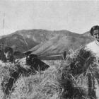 Young women  at Hawea Flat helping the war effort by taking up work usually done by men: stooking...