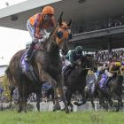 Gingernuts and Opie Bosson, who held out their challengers in the Rosehill Guineas, will reunite...