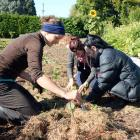 Programme manager Annika Korsten (left) plants cabbages at Kowhai Grove with Liv Bambery (18), of...