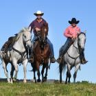 Middlemarch horses (from left) Smokey, Willy and Methven, ridden by Bruce Thomas and Jenny...