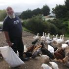 Poultry owner Wayne Richardson questions whether the Waitaki District Council can make him cut...