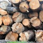 future-of-forestry-sector-up-for-discussion-1.jpg