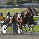 New Zealand Oaks contender Bonnie Joan heads a strong book of drives Dexter Dunn has on tonight's...
