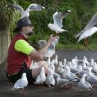 Tony Pemberton feeds his flock of friendly seagulls in Dunedin yesterday. Photo: Gerard O'Brien