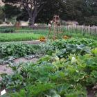 Crop rotation results in better vegetables and flowers. Photo: Gillian Vine.