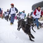 Excited dogs and their owners barrel down Coronet Peak skifield yesterday during the annual...