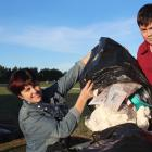 Clutha Valley Primary School teacher Rachel O'Connell and pupil Sam Whelan (11) sort through rubbish destined for landfill. They were surprised to learn most of it could be recycled. Photo: Samuel White