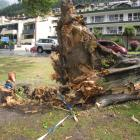 The remains of the Lombardy poplar which fell across Lake Esplanade, Queenstown, in 2014,...
