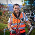 Ben Geaney won the pruning section on his way to taking the title. Photo: Supplied