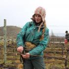 Viticulturist Brenda Stringer braves the rain to prune vines at a vineyard in Bendigo on Tuesday....