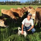 Katie Milne, seen here with heifers on her farm, is splitting her time between the West Coast and...