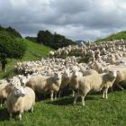 Silver Fern Farms is heralding an improved financial performance so far this year. PHOTO: BEEF +...