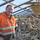 Ken Bee with a stock of kiln-dried firewood in a tunnel house at H and H Firewood and Coal. Photo...