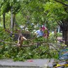 A man walks among tree branches broken by strong winds brought by Typhoon Hato in Shenzhen. Photo...