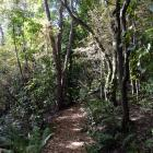 One of the native bush areas in the upper botanic garden. Photo: Linda Robertson