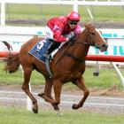 Suspension has forced jockey Alysha Collet out of classy filly Prom Queen's saddle at Ashburton...