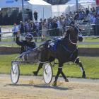 Lazarus wins his second New Zealand Cup at Addington today for driver Mark Purdon. Photo: JONNY...