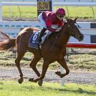Sensational Ruakaka filly Prom Queen is an odds-on favourite for tomorrow's group 1 One Thousand...