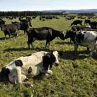 Some groups have backed Sir Tim Smit's blaming of dairying for tainting New Zealand's clean,...