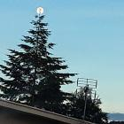 Perfect timing on Saturday night. The moon adorns the top of a Northeast Valley Christmas tree...