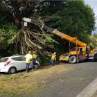 Contractors clear a branch which fell and blocked the road in Strathmore Cres, Dunedin, yesterday...