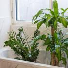 Laying an old towel down in the bath, putting your pot plants on it and giving the whole lot a...