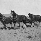 A nice team of horses ploughing at Mr T. Gawn's farm at North Taieri. - Otago Witness, 2.1.1918.