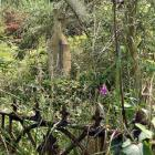 The Glenore Manuka Trust, the group behind the restoration of the Mt Stuart Reserve,  set its...