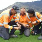 Checking a core sample from the wicket block at Queenstown's John Davies Oval on Tuesday are ...