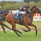 Matamata mare Volpe Veloce will attempt a rare double when she lines up in today's group 1...