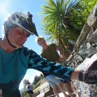 Touchstone project manager Chris Arbuckle fills his water bottle at the Wanaka community  spring...