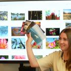 Otago Wildlife Photography Competition judge Shanaya Allan looks at some of the colourful images...