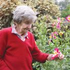 Betty Dodds of Te Anau, in her garden admiring her dahlia bloom. Betty is the original organiser...