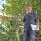 Senior constable Nayland Smith, of Omarama, with some of the cannabis plants, recovered by police...
