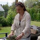 "Bianca MacNeill prepares nettle tea at the Waitaki Community Gardens during hte ""Eat your lawn""..."
